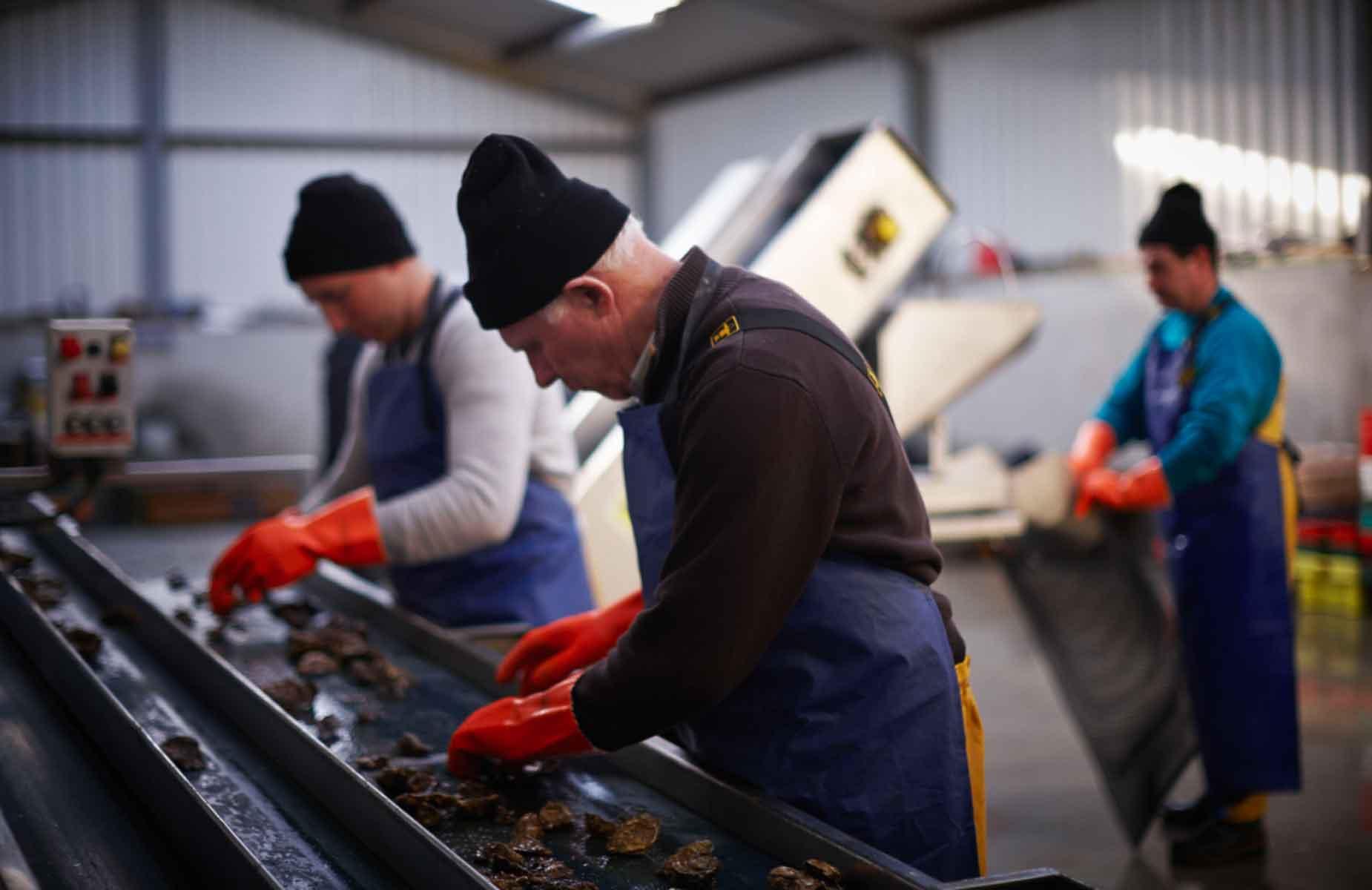 moyasta oysters